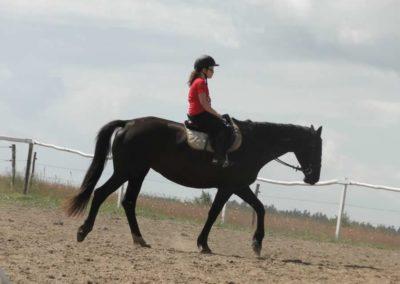 oboz-konie-2014-5-0013