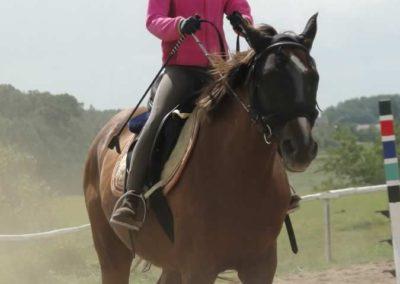 oboz-konie-2014-5-0020