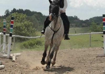 oboz-konie-2014-5-0024
