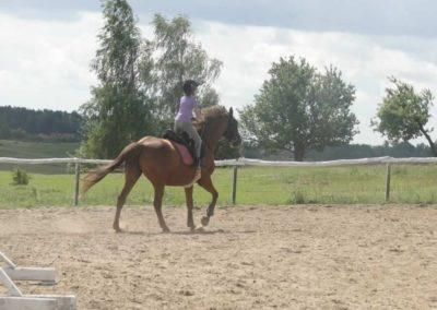 oboz-konie-2014-5-0025