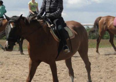 oboz-konie-2014-5-0046