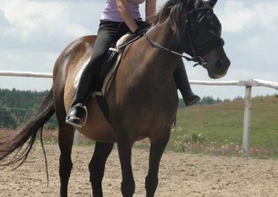 oboz-konie-2014-5-0049