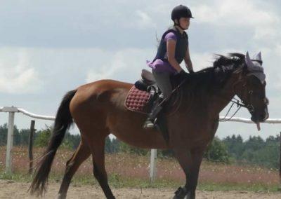 oboz-konie-2014-5-0050