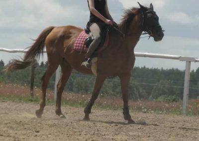 oboz-konie-2014-5-0052