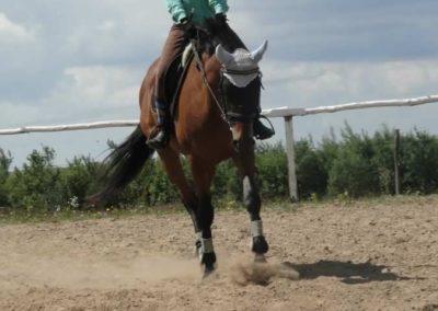oboz-konie-2014-5-0054