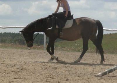 oboz-konie-2014-5-0055