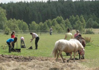 oboz-konie-2014-5-0058