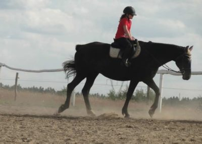 oboz-konie-2014-5-0110