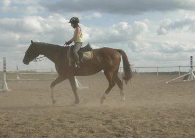 oboz-konie-2014-5-0111