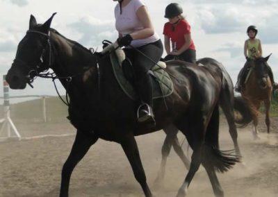 oboz-konie-2014-5-0113