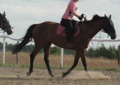oboz-konie-2014-5-0118
