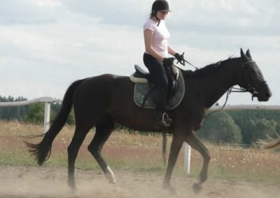 oboz-konie-2014-5-0121
