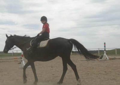 oboz-konie-2014-6-0002