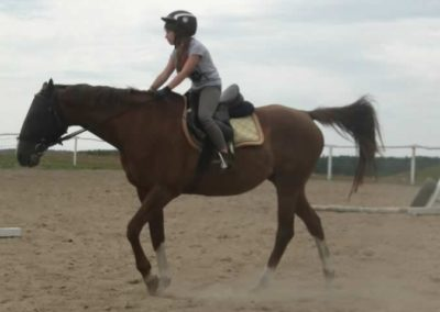oboz-konie-2014-6-0006