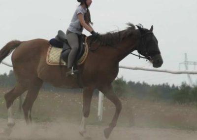 oboz-konie-2014-6-0008