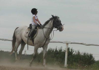oboz-konie-2014-6-0011