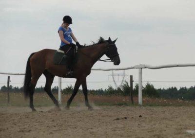 oboz-konie-2014-6-0013