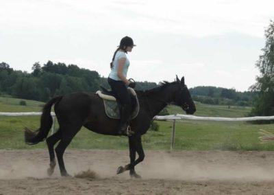 oboz-konie-2014-6-0016