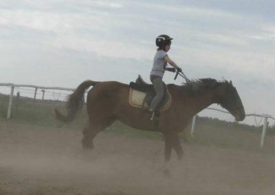oboz-konie-2014-6-0017