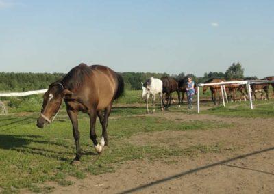 oboz-konie-2014-6-0020