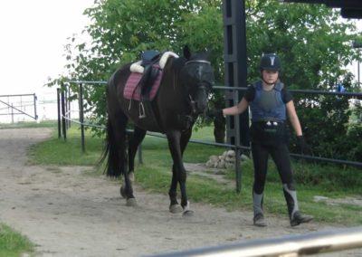 oboz-konie-2014-6-0032