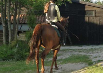 oboz-konie-2014-6-0045