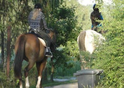 oboz-konie-2014-6-0051
