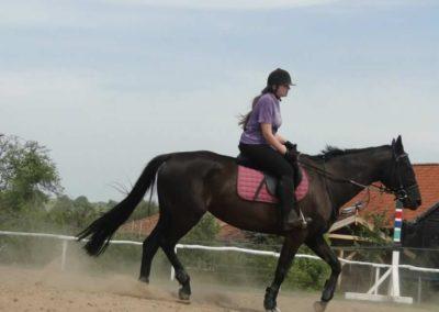oboz-konie-2014-7-0005