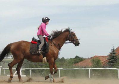 oboz-konie-2014-7-0008