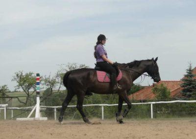 oboz-konie-2014-7-0009