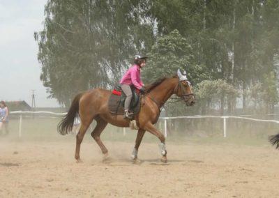 oboz-konie-2014-7-0012