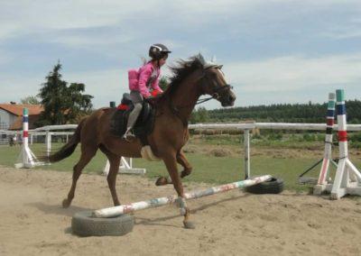 oboz-konie-2014-7-0017