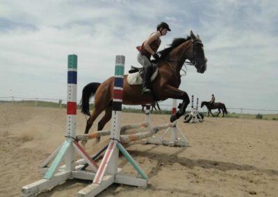 oboz-konie-2014-7-0035