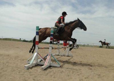 oboz-konie-2014-7-0041