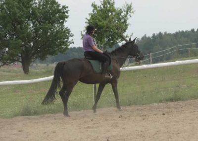 oboz-konie-2014-7-0074