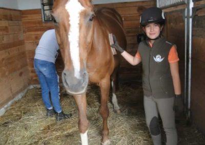 oboz-konie-2015-1-0005