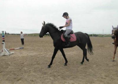 oboz-konie-2015-1-0008