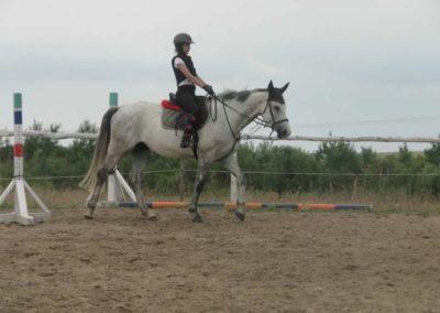 oboz-konie-2015-1-0009