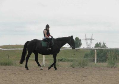 oboz-konie-2015-1-0010