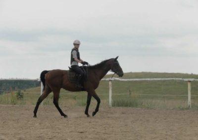 oboz-konie-2015-1-0011