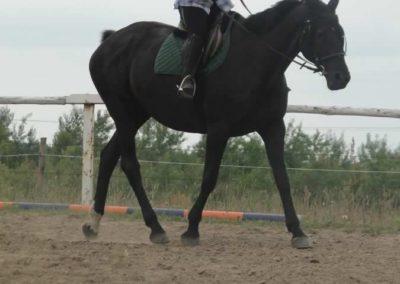 oboz-konie-2015-1-0017