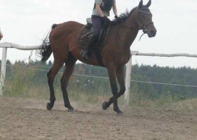 oboz-konie-2015-1-0021