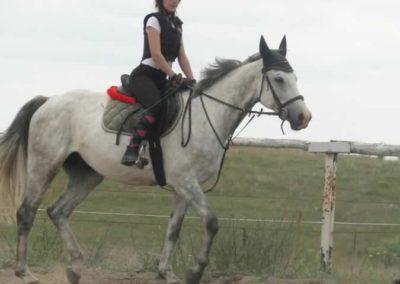 oboz-konie-2015-1-0022
