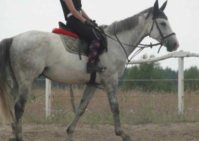 oboz-konie-2015-1-0026