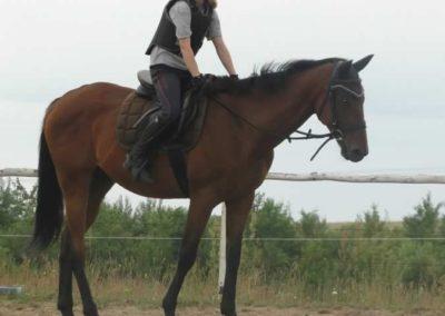 oboz-konie-2015-1-0027