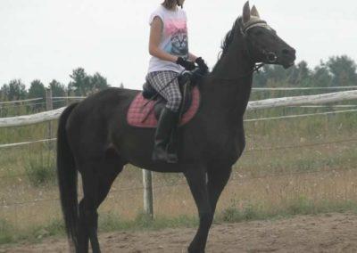 oboz-konie-2015-1-0028