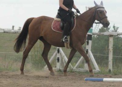 oboz-konie-2015-1-0037