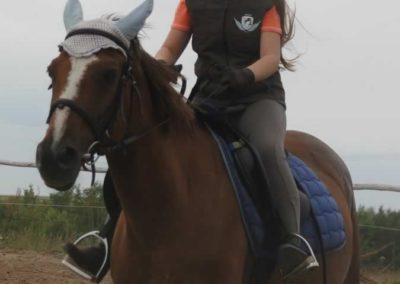 oboz-konie-2015-1-0040