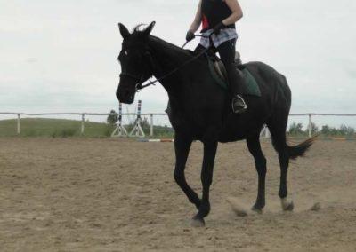 oboz-konie-2015-1-0048