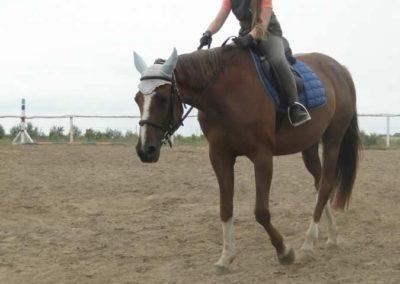 oboz-konie-2015-1-0049